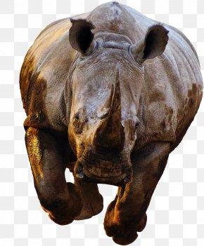 Rhino - Rhinoceros 3D Spider-Man PNG