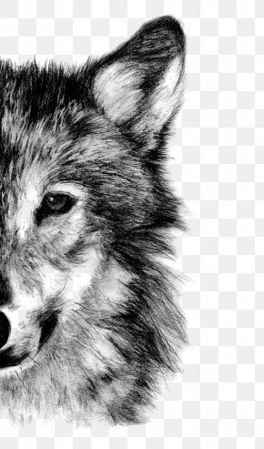 Wolf - Gray Wolf Drawing Pencil Sketch PNG