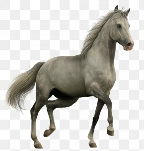 Horse - Horse Icon PNG