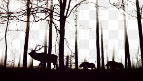 Black Forest - Wild Boar Cloud Forest Fog Tree PNG