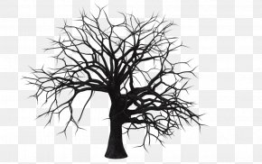 Free Tree Pictures - Tree Branch Clip Art PNG