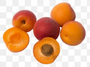 Apricot - Apricot Kernel Apricot Oil Amygdalin Fruit PNG