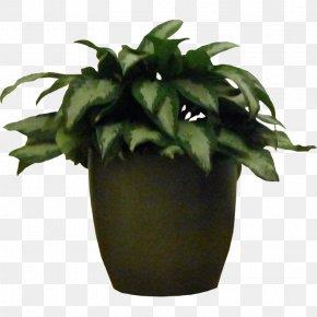 Plants - Rubber Fig Houseplant Flowerpot Tree PNG