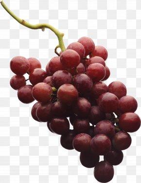 Grape Image - Red Wine Shiraz Grape PNG