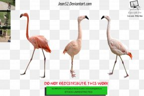 Bird - Flamingos Bird Download Animal DeviantArt PNG