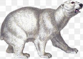 Polar Bear - Alaskan Tundra Wolf Polar Bear Wildlife Fur PNG