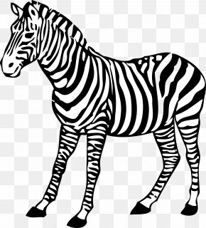 Zebra Image - Image File Formats Lossless Compression Raster Graphics PNG