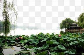 Daming Lake Scenery Pictures - Daming Lake Landscape Fukei PNG