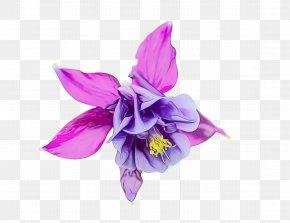 Cattleya Dendrobium - Flowering Plant Flower Violet Purple Petal PNG