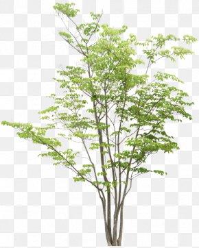 Tree - Tree Rendering Adobe Photoshop Elements PNG