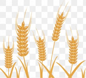 Wheat Pattern Vector Material Exquisite Design - Photography Wheat Illustration PNG