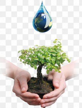 Valuing Water - Tree Bonsai Business Company Waste Oil PNG