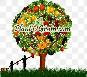 Tree - Fruit Tree Floral Design Tropical Fruit Breadfruit PNG