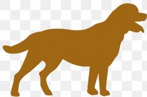 Brown Dog - Nova Scotia Duck Tolling Retriever Puppy Dog Breed Companion Dog PNG