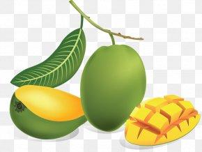 Green Mango - Juice Mango Fruit Drawing PNG
