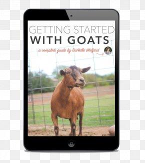 Goat - Nigerian Dwarf Goat Cattle Pygmy Goat Boer Goat Kiko Goat PNG