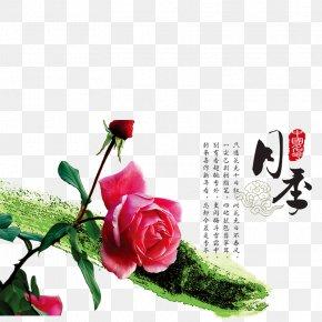 Chinese Rose - Garden Roses Rosa Chinensis Shiqiaozhen Beach Rose U4e2du56fdu5341u5927u540du82b1 PNG