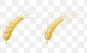 Wheat Vector Material Free - Euclidean Vector Gratis Computer File PNG
