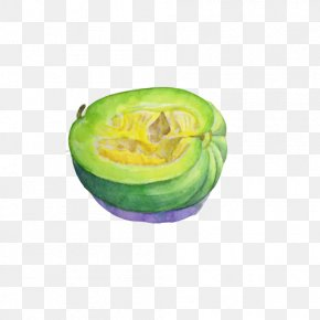 Green Melon Hand Painting Material Picture - Watercolor Painting Illustrator World Wide Web Painter PNG