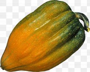Pumpkin Image - Zucchini Cucurbita Maxima Winter Squash Butternut Squash Acorn Squash PNG