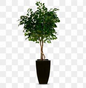 Pot Plant - Guiana Chestnut Rubber Fig Tree Fiddle-leaf Fig Houseplant PNG