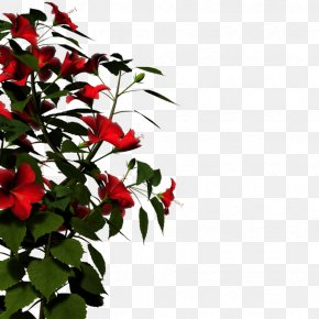 Picture Of Hibiscus Plant - Display Resolution High-definition Television High-definition Video PNG