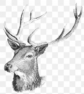 Deer Head Free Download - White-tailed Deer Moose Reindeer Clip Art PNG