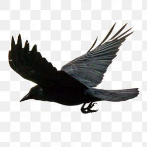 Flying The Crows PNG
