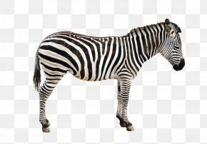 Black Zebra - Zebra Icon PNG