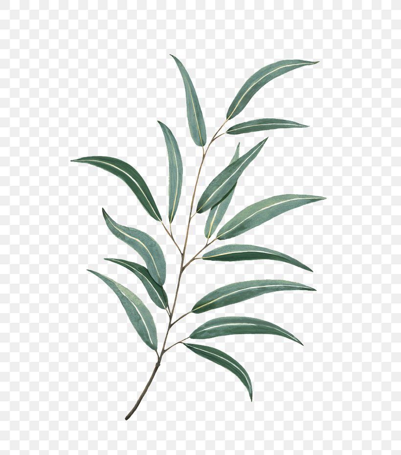 Leaf Watercolor Painting Drawing Tattoo, PNG, 658x930px, Leaf, Botanical Illustration, Branch, Cushion, Drawing Download Free