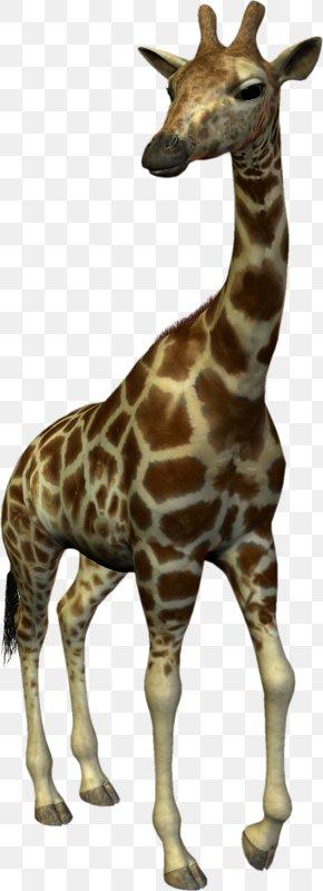 Giraffe - Northern Giraffe Dog Lion Horse PNG