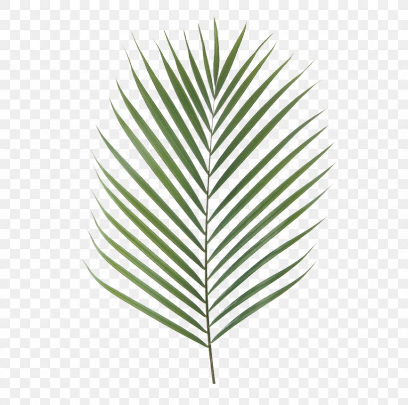 Canary Island Date Palm Palm Branch Artificial Flower Leaf Chamaerops, PNG, 870x864px, Canary Island Date Palm, Areca Palm, Arecaceae, Artificial Flower, Chamaerops Download Free