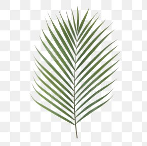 Areca Palm - Canary Island Date Palm Palm Branch Artificial Flower Leaf Chamaerops PNG