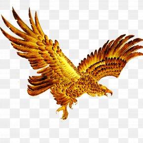 Eagle - Bald Eagle Hawk Ink Wash Painting PNG