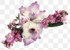 Gladiolus - Greeting & Note Cards Ansichtkaart Friendship Gratitude Birthday PNG