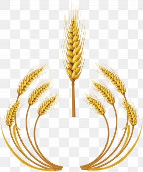 Wheat - Wheat Royalty-free Ear Clip Art PNG