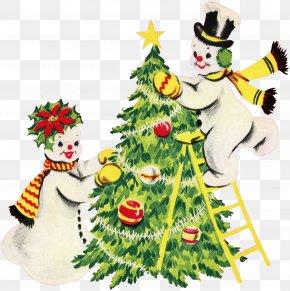 Christmas Tree - Christmas Tree Christmas Ornament Spruce Fir PNG