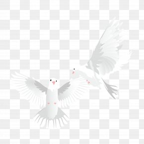 Pigeon Vector Material - Beak Feather Pattern PNG