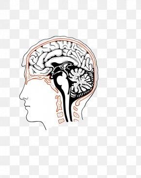 Abstract Human Brain Comics - Royalty-free Stock Photography Human Brain PNG