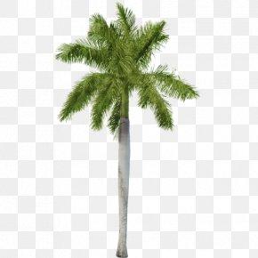 Palm Leaf - Fiddle-leaf Fig Common Fig Houseplant Tree PNG