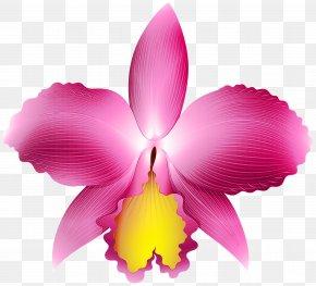 Laelia Orchid - Flowering Plant Petal Flower Cattleya Labiata Pink PNG