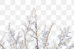 Frozen Branches - Twig Branch Ice PNG