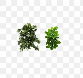 Plant - Houseplant Areca Palm Arecaceae Tree PNG