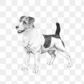 Puppy - Dog Breed Jack Russell Terrier Puppy American Staffordshire Terrier Bergamasco Shepherd PNG