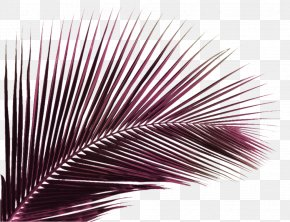 Palm Branch Green - Coconut Vector Graphics Palm Trees Clip Art PNG