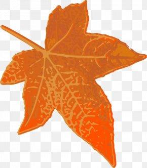 Maple Leaf - Maple Leaf Orange Clip Art PNG