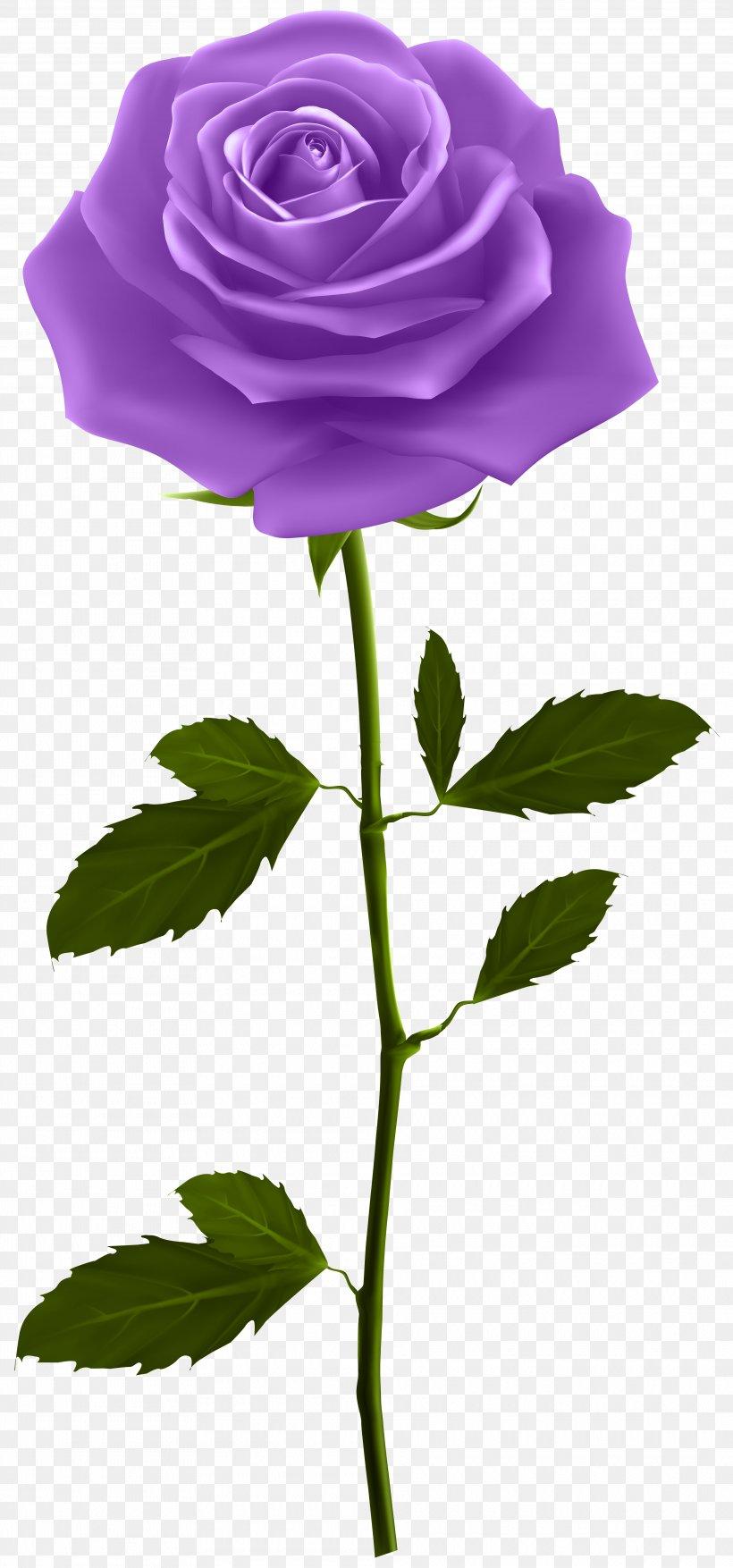 Rose Clip Art, PNG, 3740x8000px, Rose, Blue Rose, Flora, Flower, Flowering Plant Download Free