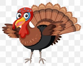 Domesticated Turkey Thanksgiving - Turkey Thanksgiving Cartoon PNG