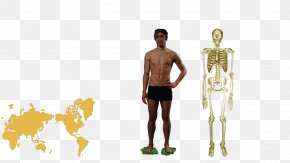 Human Body Cartoon - Homo Sapiens Human Anatomy Human Body Human Behavior PNG