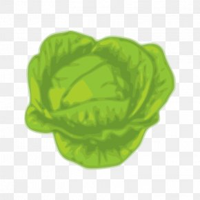 Cabbage - Cabbage Stock Photography Vegetable Art Clip Art PNG
